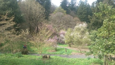 Magnolia Garden in Hoyt Arboretum, Portland, OR